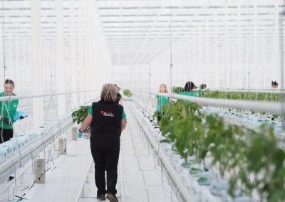 Výstavba skleníku – Kostelec na Hané
